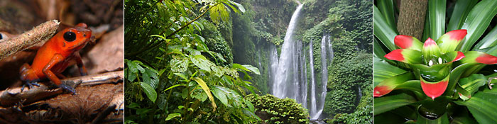 Regenwald Impressionen